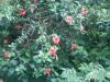 菜園村 圭角山  E9cc08480686657