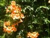 Hiking 2012 June 16 - 頁 2 575b3a498627075