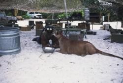 Остров Маккинси / Mc Cinsey's island (Халк Хоган, 1997)  561c8f508284286